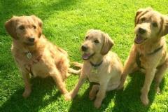 Felix, Chloe og Nugga (Hope og Joy)