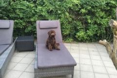 Bailey fra Riga og Peanut