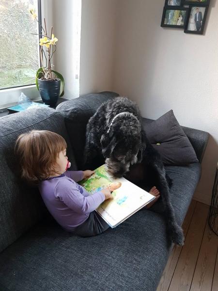 Sigurd (Mille og Curtis) Stor Trimmehund