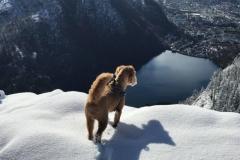 Idefix (Norge) Joy og persy søn. Trimmehund.