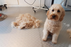 Ronja frisør