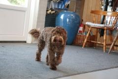 Bailey 5