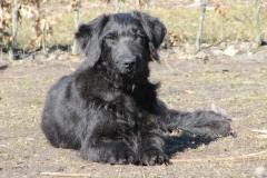div-vores-hunde-242013-025-500x375