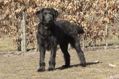 div-vores-hunde-242013-032-500x375