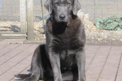 div-vores-hunde-242013-053-375x500