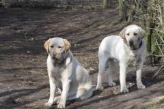 div-vores-hunde-242013-057-500x375