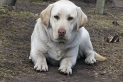 div-vores-hunde-242013-063-500x375