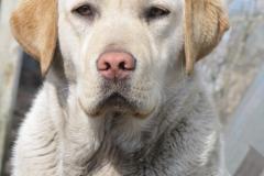 div-vores-hunde-242013-064-375x500