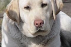 div-vores-hunde-242013-065-375x500