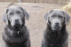 div-vores-hunde-242013-072-500x375