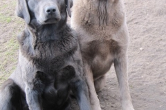 div-vores-hunde-242013-075-375x500