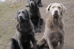 div-vores-hunde-242013-081-375x500
