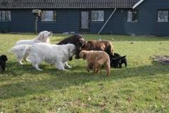 hunde-i-haven-632012-385