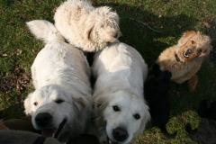hunde-i-haven-632012-398