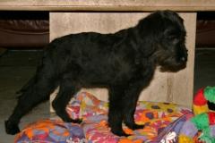 teide-og-sordo-pelsskift-20102012-029-500x334
