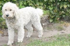 vores-hunde-4102013-015