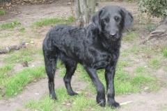 vores-hunde-4102013-017