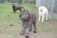 vores-hunde-4102013-030