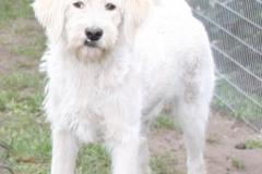 vores-hunde-4102013-030(1)