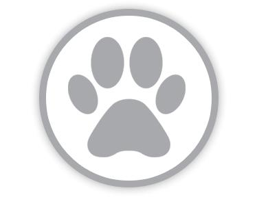 Blindeførerhunde afsted til Tyskland