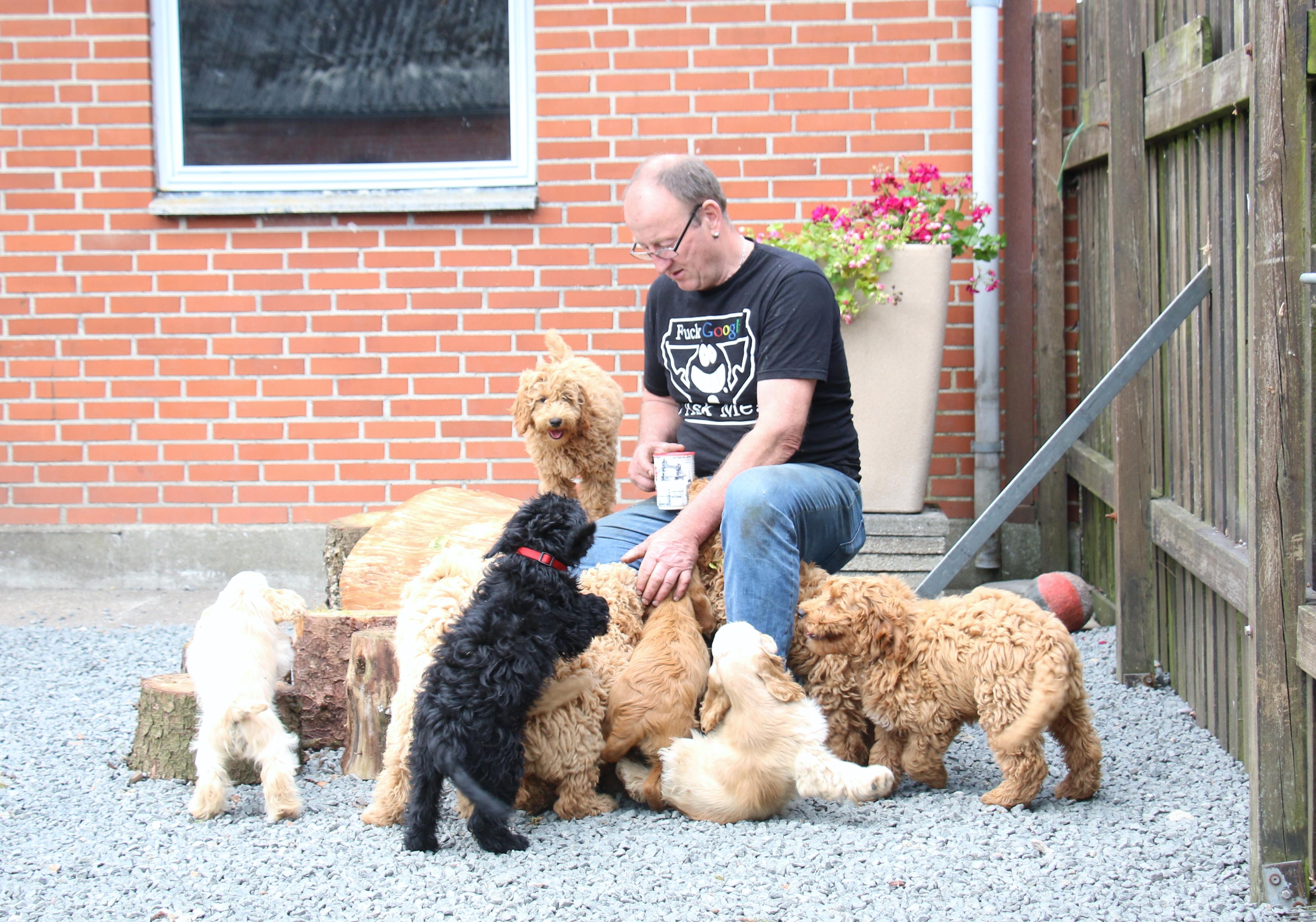 Specialdogs gårdsplads 2017