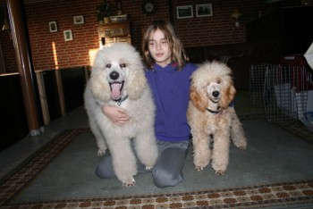 Ozzy til højre er lys Abrikos.
