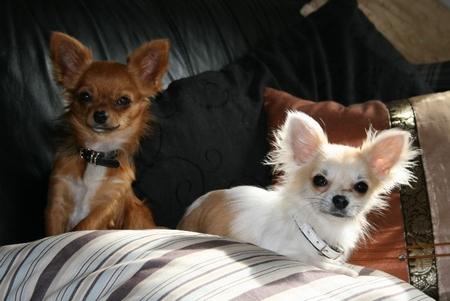 Thyson er 6 mdr. og Viola er 1 år.