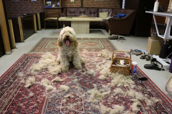 Lange pelsfrakker (24 fotos): i gulvet, pels, bred