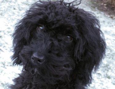 Hundepension, salg af hundehvalpe og hundepsykolog m.fl. - Specialdogs